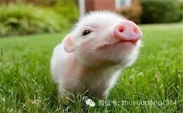 生猪出栏增加养殖企业扩产 年报业绩表现亮眼