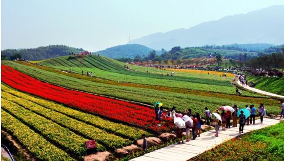 """奇彩梦园:领跑重庆乡村旅游的""""花花世界"""""""